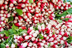 Radishes. The picture shows a french market stall in paris with radishes Royalty Free Stock Photos