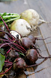 Radishes Stock Photography