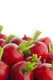 Radishes Stock Photos