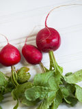 Radishes. The radish is an edible root vegetable of the  that was domesticated in Europe, in pre-Roman times Stock Photo