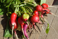 Radishes. A bunch of fresh radishes on wooden stairs Stock Images