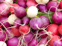 Radishes. Brightly colored radishes at the farmers market royalty free stock photo