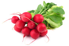 Free Radishes Royalty Free Stock Image - 27929216