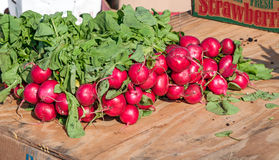 radishes Fotos de Stock