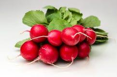 radishes Foto de Stock