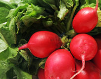 Free Radishes Stock Image - 5665051