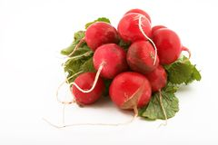 Radishes. Bunch of fresh radishes royalty free stock photo