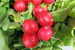 radishes Fotografia de Stock Royalty Free