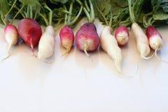 Radishes along top border. Variety of radishes along top border of image Stock Images