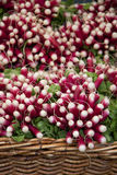 Radishes in a basket. A basket of fresh, bunched radishes for sale at a market Stock Photography