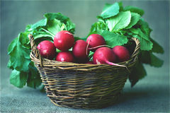 Radishes in a basket Royalty Free Stock Photo