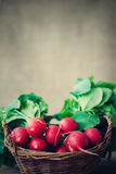 Radishes in a basket Royalty Free Stock Photos
