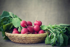 Radishes in a basket Royalty Free Stock Images
