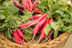 Radishes in the basket Royalty Free Stock Photography