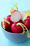Radishes in a blue bowl Royalty Free Stock Image