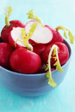 Radishes in a bowl Stock Photography