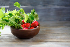 Radishes in a bowl Royalty Free Stock Photo