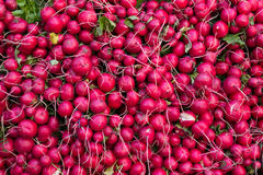 Radishes Stock Image