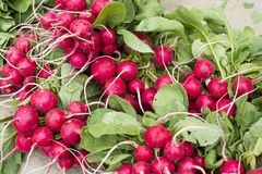 Radishes. Bundles of fresh radishes with tops at Farmer`s Market Royalty Free Stock Photos