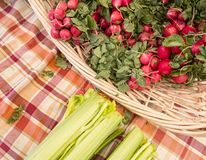 Radishes and celery Royalty Free Stock Photo