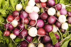 Radishes coloridos Fotografia de Stock