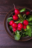 Radishes on a dark background. Bunch of radishes on a plate Stock Photography
