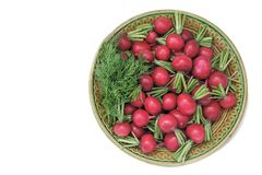 Radishes and dill on a plate on a white background. On the ceramic plate are the fruits of the radish and dill. Presented on a white background Royalty Free Stock Images