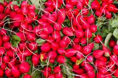 Radishes on display. Freshly harvested red radishes on display at the farmer's market Royalty Free Stock Images