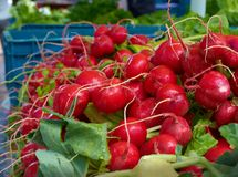 Radishes at Farmer s Market. A farmers market display of fresh radishes Stock Photography