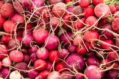 Radishes At Farmers Market Stock Image
