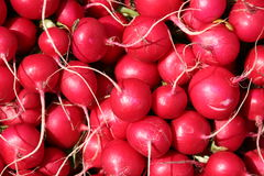 Radishes frescos Foto de Stock Royalty Free