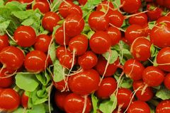 Radishes. Fresh bright red radishes from farmers market Royalty Free Stock Photos