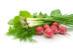 Radishes and fresh herbs on a white background Royalty Free Stock Images