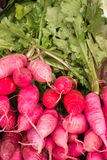 Radishes freshly pulled Close-up Radishes Stock Photos