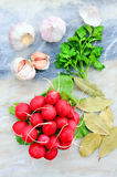 Radishes and garlic on a light background. Beautiful still life of fresh vegetables and bay leaf. Radishes and garlic on a light background. Beautiful still Royalty Free Stock Photography