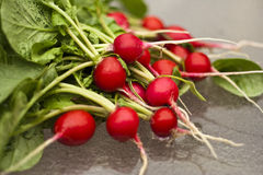 Radishes on glass table. Organically grown red radishes fresh from garden on a glass table Stock Photography