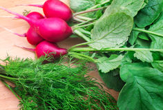 Radishes and green dill on a cutting Board Royalty Free Stock Photos
