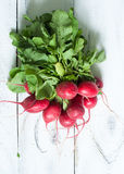 Radishes with green leaves Royalty Free Stock Images