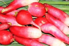 Radishes and green onions closeup. Fresh radishes and green onions Royalty Free Stock Photo