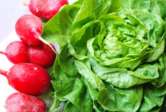 Radishes and green salad Stock Photos