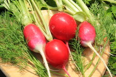 Radishes and greens on a cutting board Stock Image