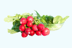Radishes and greens for salad isolated Stock Images