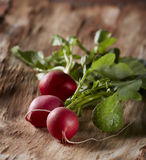 Radishes group Stock Photography