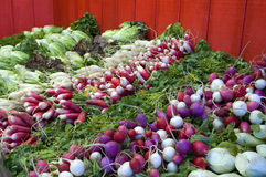 Radishes, herbs and lettuce. On display at a farmer's market Royalty Free Stock Photo