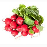 Radishes Isolated Royalty Free Stock Image