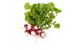 Radishes with leaves. Bunch of fresh radishes with leaves on white. Isolated Stock Photo