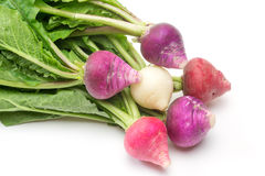 Radishes with leaves in a white background Stock Image