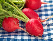 Radishes Macro Royalty Free Stock Photos