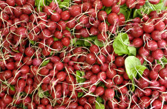 Radishes on the market Stock Photos