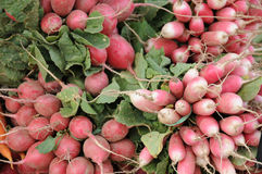 Radishes on the market Stock Images